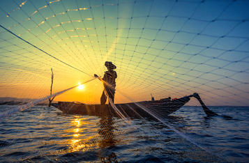 United Nations FAO: Blockchain, IoT and Robotics Can Foster a Sustainable and Profitable Global Seafood Economy